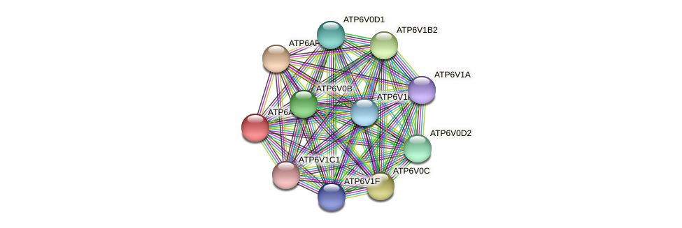 ATP6AP1 protein (Latimeria chalumnae) - STRING interaction network
