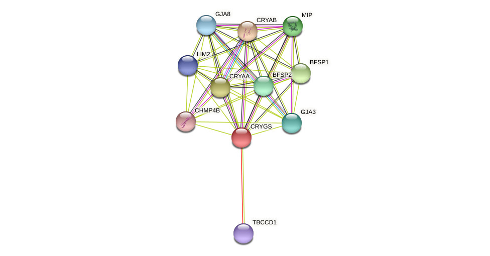 CRYGS protein (Latimeria chalumnae) - STRING interaction network