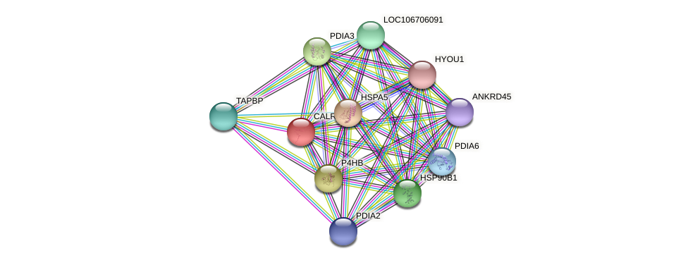 ENSLACG00000001714 protein (Latimeria chalumnae) - STRING interaction network