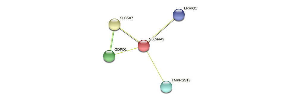 SLC44A3 protein (Latimeria chalumnae) - STRING interaction network