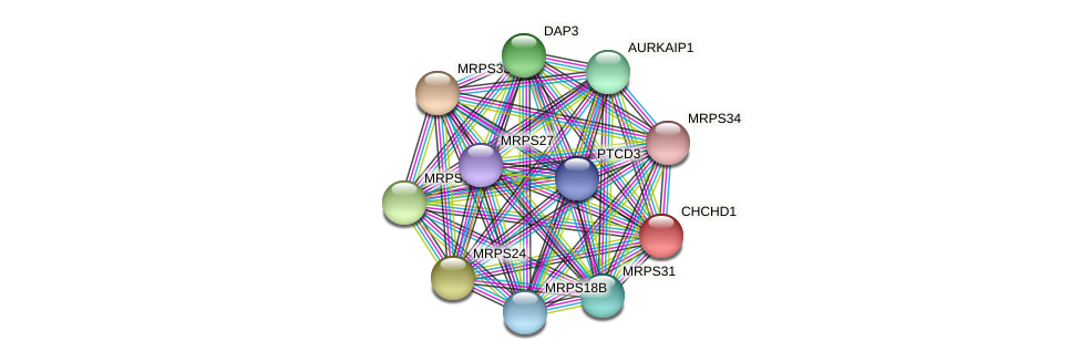 CHCHD1 protein (Latimeria chalumnae) - STRING interaction network