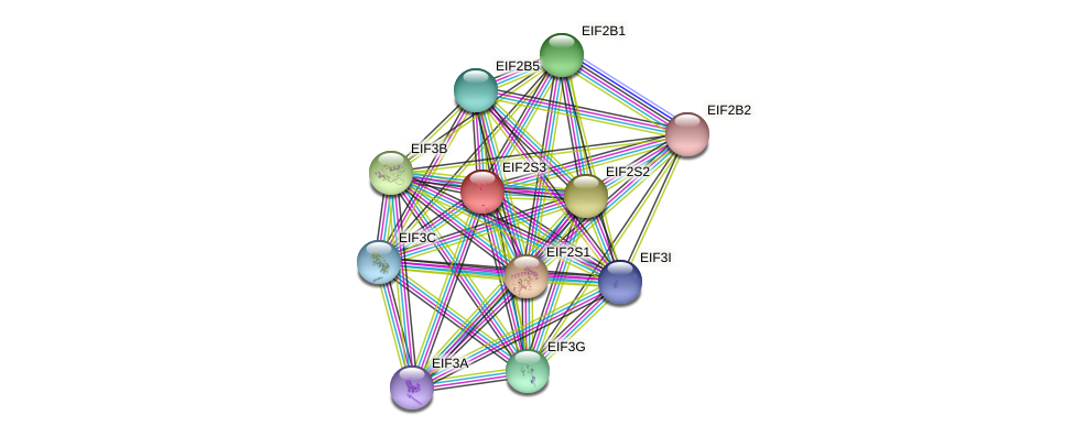 EIF2S3 protein (Latimeria chalumnae) - STRING interaction network