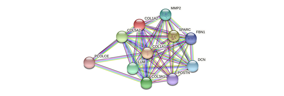 COL1A2 protein (Latimeria chalumnae) - STRING interaction network