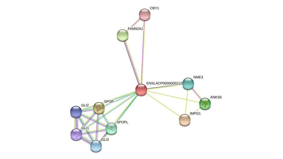 ENSLACG00000001896 protein (Latimeria chalumnae) - STRING interaction network