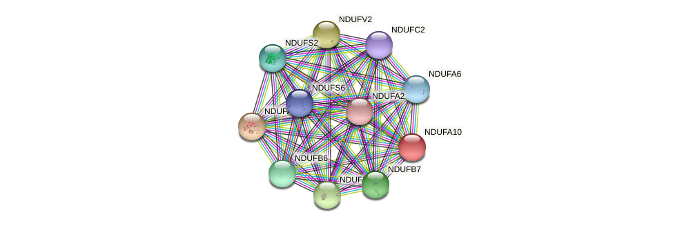 NDUFA10 protein (Latimeria chalumnae) - STRING interaction network