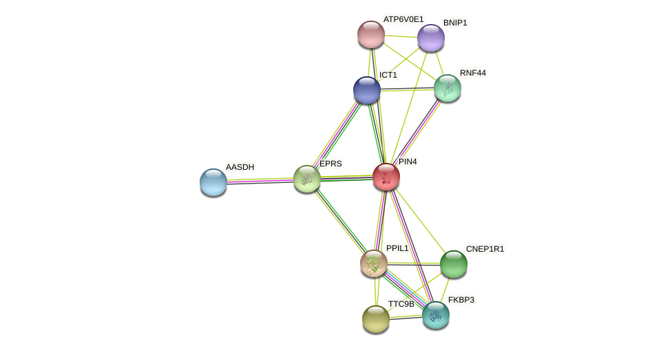PIN4 protein (Latimeria chalumnae) - STRING interaction network