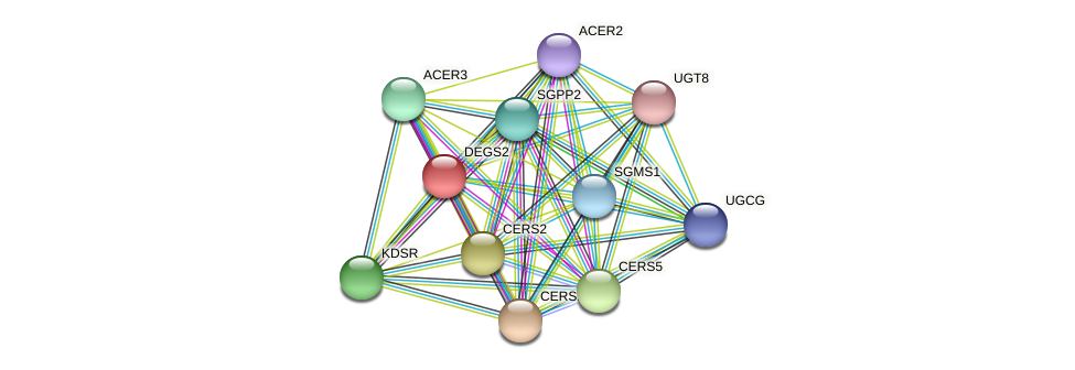 DEGS2 protein (Latimeria chalumnae) - STRING interaction network