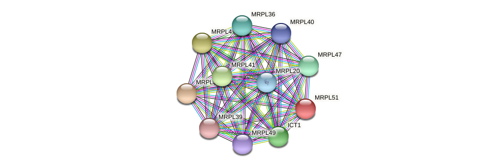 MRPL51 protein (Latimeria chalumnae) - STRING interaction network