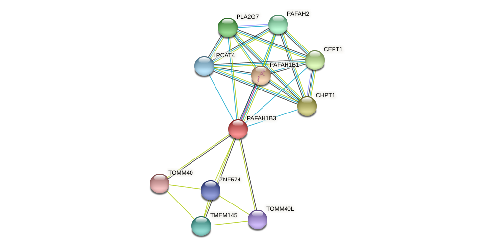 PAFAH1B3 protein (Latimeria chalumnae) - STRING interaction network