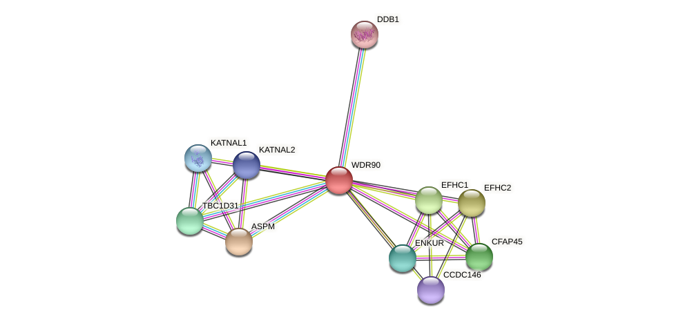 WDR90 protein (Latimeria chalumnae) - STRING interaction network