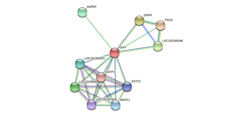 GGH protein (Latimeria chalumnae) - STRING interaction network
