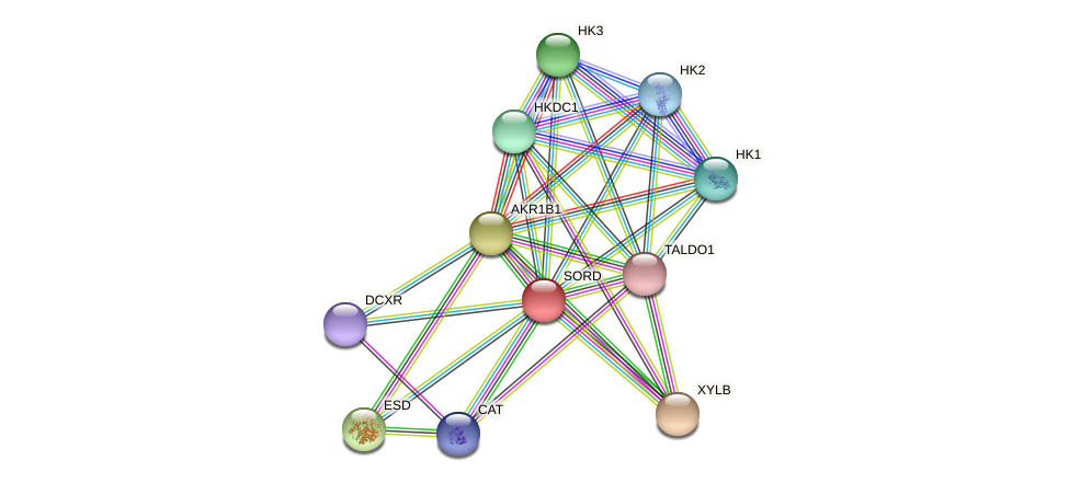SORD protein (Latimeria chalumnae) - STRING interaction network