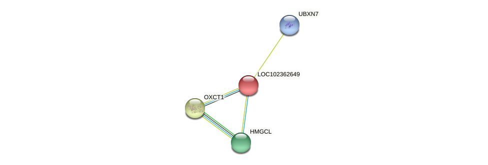 ENSLACG00000002352 protein (Latimeria chalumnae) - STRING interaction network