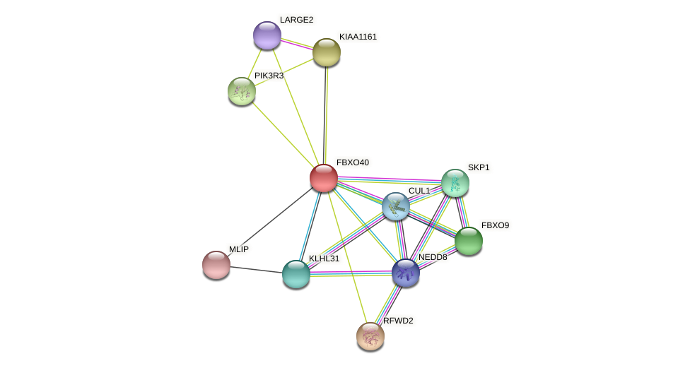 FBXO40 protein (Latimeria chalumnae) - STRING interaction network
