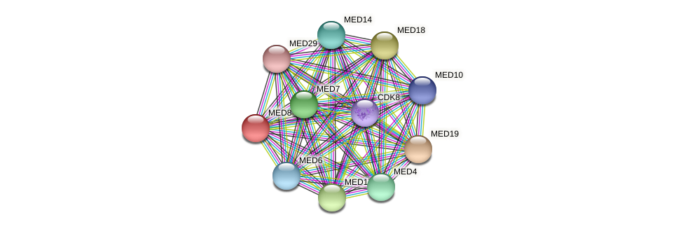 MED8 protein (Latimeria chalumnae) - STRING interaction network