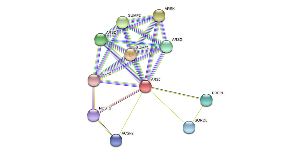 ARSJ protein (Latimeria chalumnae) - STRING interaction network