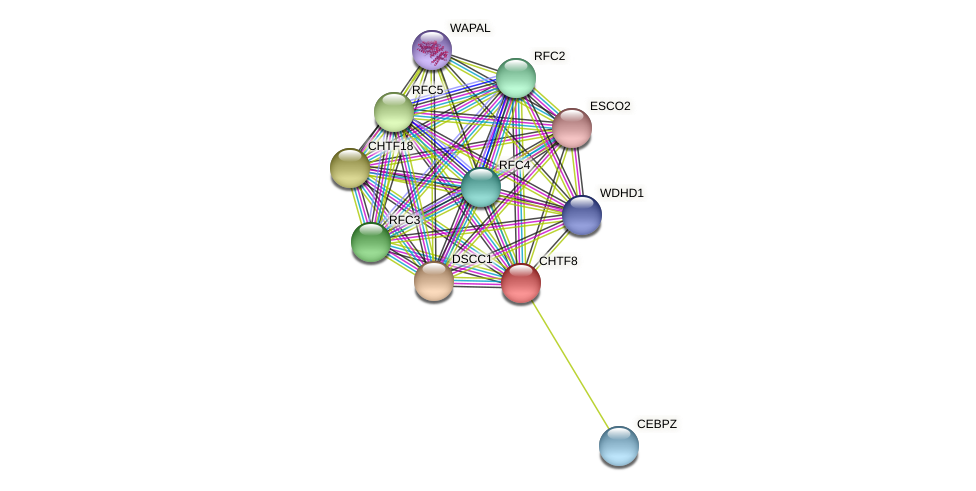 CHTF8 protein (Latimeria chalumnae) - STRING interaction network