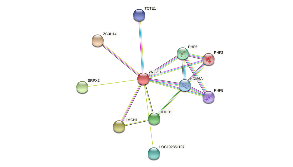 ZNF711 protein (Latimeria chalumnae) - STRING interaction network