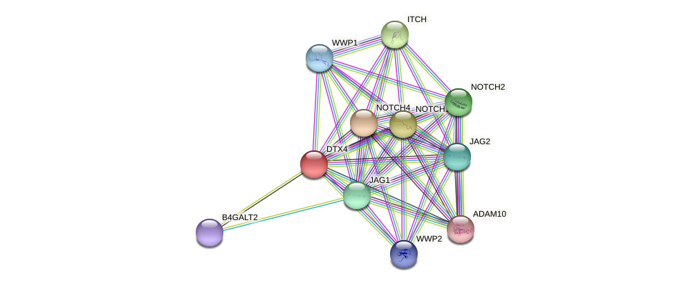 DTX4 protein (Latimeria chalumnae) - STRING interaction network