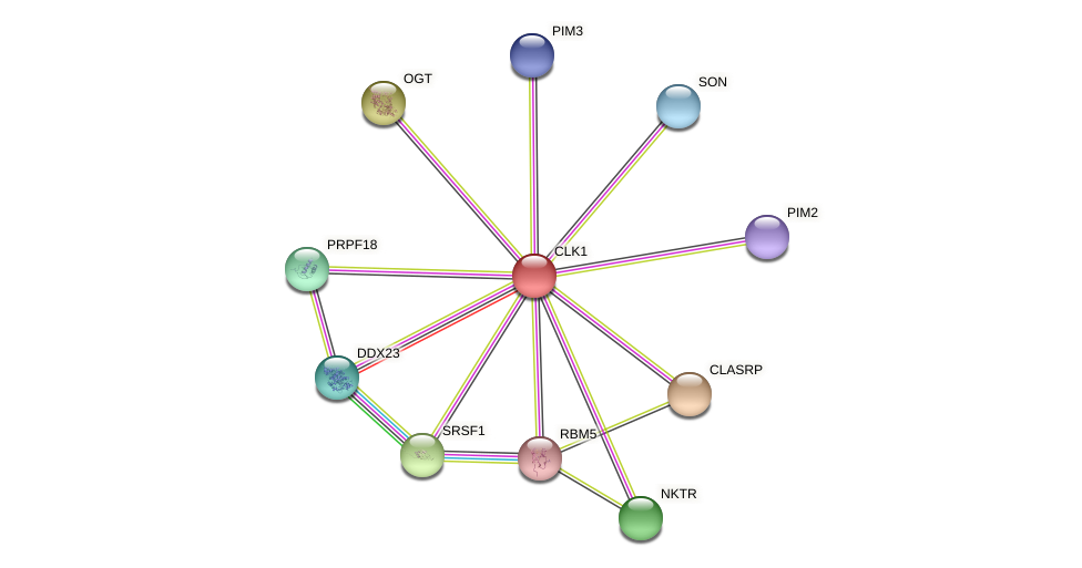 ENSLACG00000002514 protein (Latimeria chalumnae) - STRING interaction network