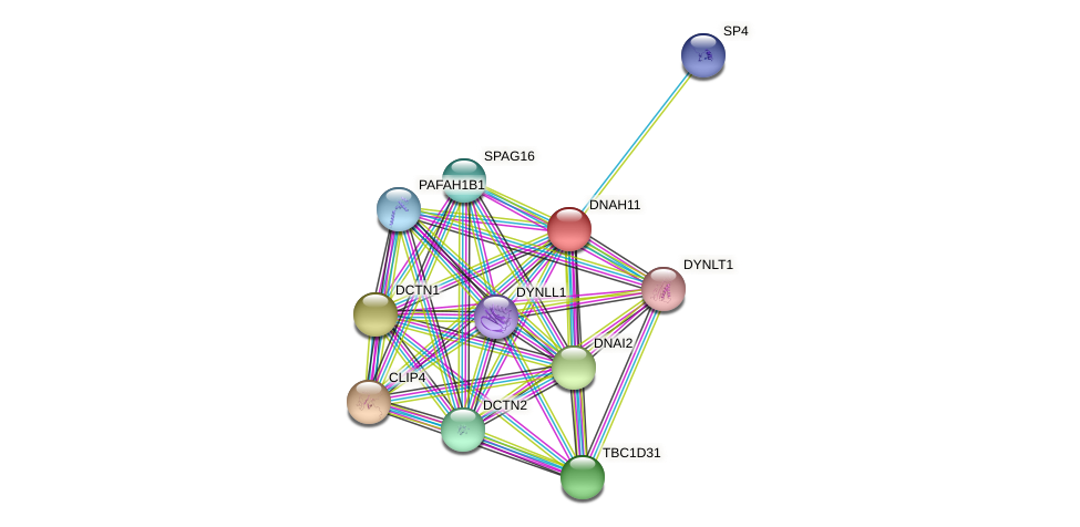 DNAH11 protein (Latimeria chalumnae) - STRING interaction network