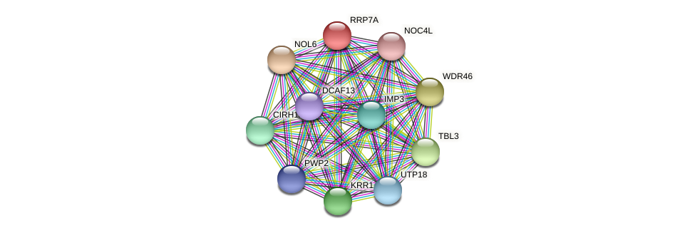 RRP7A protein (Latimeria chalumnae) - STRING interaction network