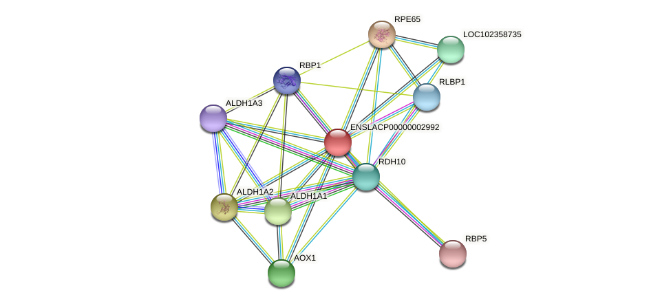 DHRS9 protein (Latimeria chalumnae) - STRING interaction network