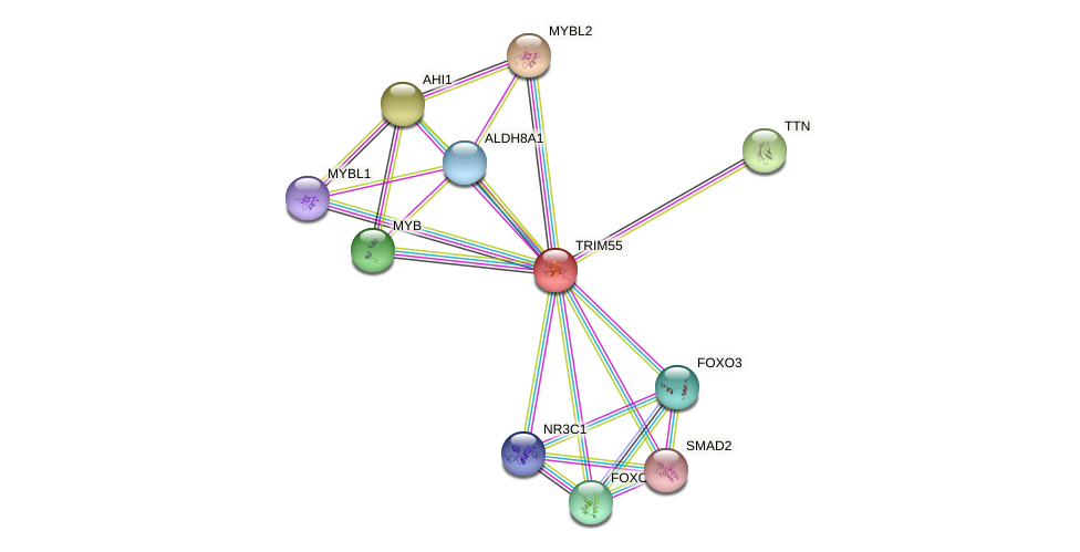 TRIM55 protein (Latimeria chalumnae) - STRING interaction network