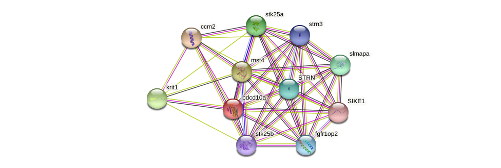 pdcd10a protein (Danio rerio) - STRING interaction network