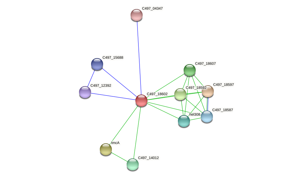 C497_18602 protein (Halalkalicoccus jeotgali) - STRING interaction network