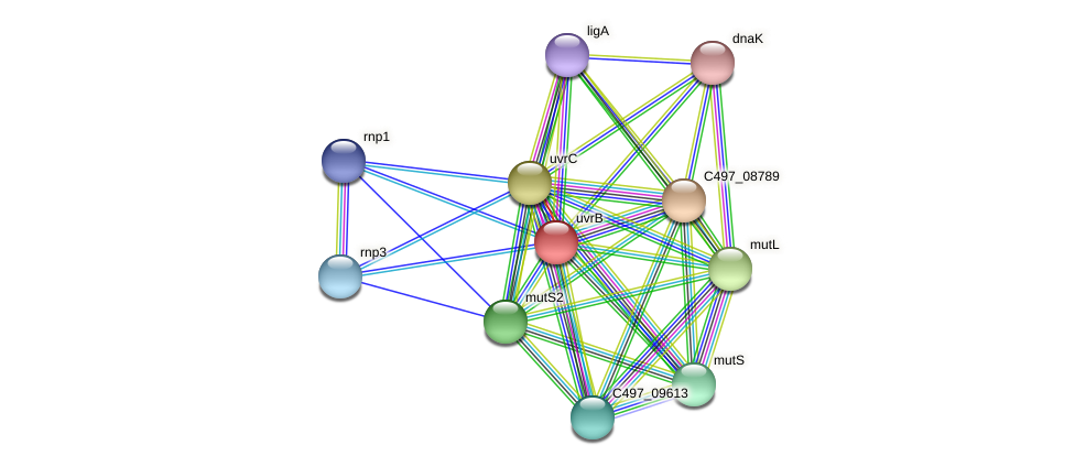 uvrB protein (Halalkalicoccus jeotgali) - STRING interaction network