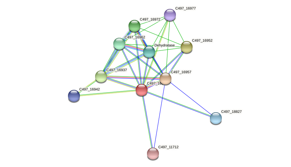 C497_16947 protein (Halalkalicoccus jeotgali) - STRING interaction network