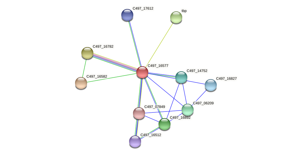 C497_16577 protein (Halalkalicoccus jeotgali) - STRING interaction network