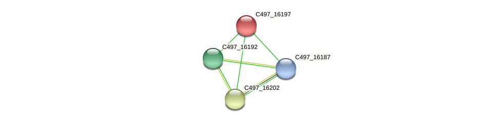 C497_16197 protein (Halalkalicoccus jeotgali) - STRING interaction network
