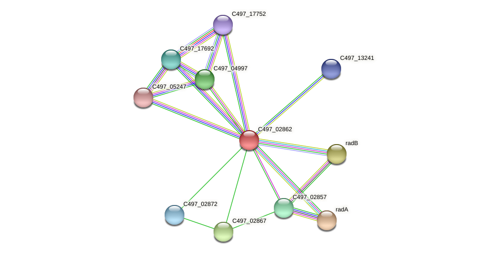 C497_02862 protein (Halalkalicoccus jeotgali) - STRING interaction network