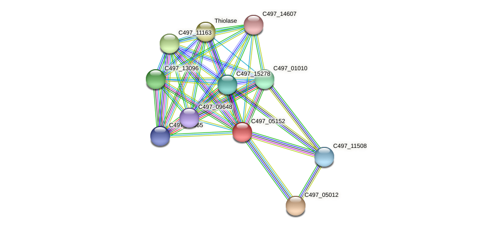 C497_05152 protein (Halalkalicoccus jeotgali) - STRING interaction network
