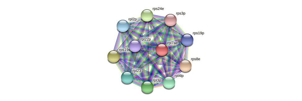 rpl7ae protein (Halalkalicoccus jeotgali) - STRING interaction network