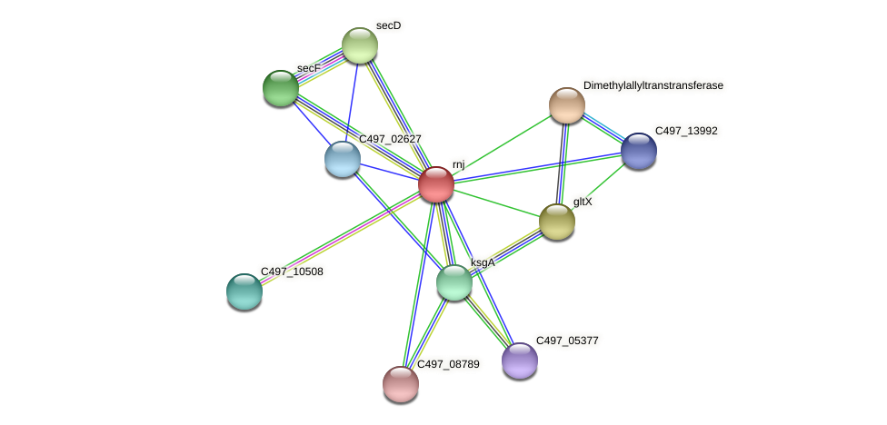 rnj protein (Halalkalicoccus jeotgali) - STRING interaction network