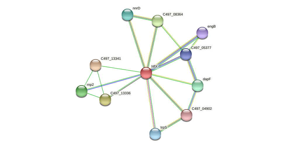 hflX protein (Halalkalicoccus jeotgali) - STRING interaction network