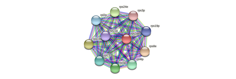rps3ae protein (Halalkalicoccus jeotgali) - STRING interaction network