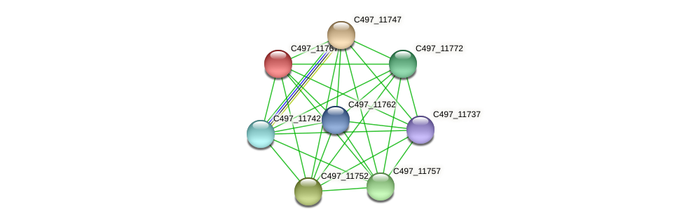 C497_11767 protein (Halalkalicoccus jeotgali) - STRING interaction network