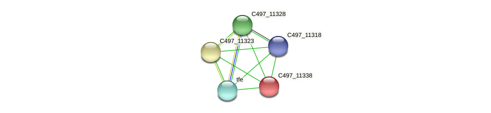 C497_11338 protein (Halalkalicoccus jeotgali) - STRING interaction network