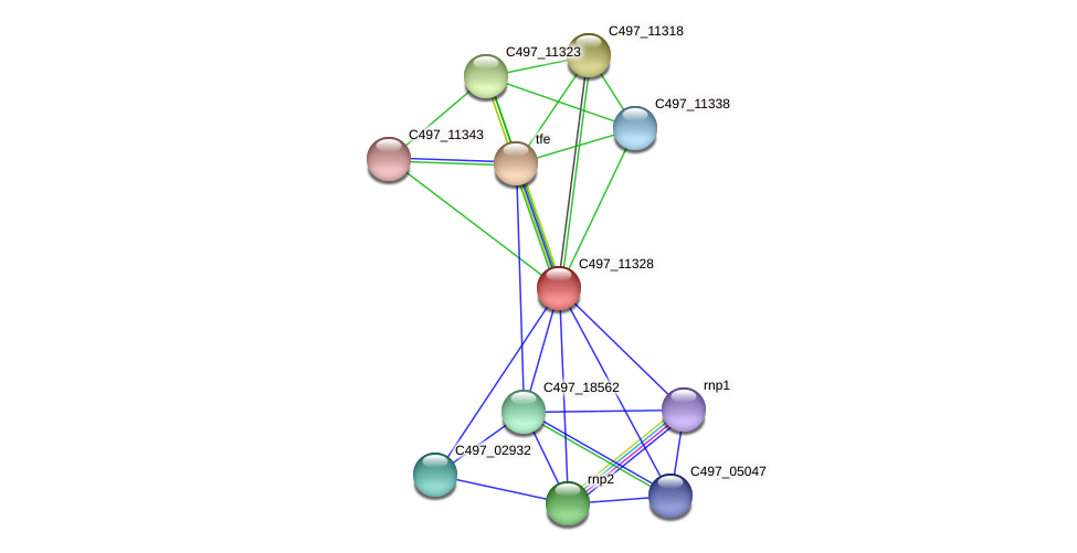 C497_11328 protein (Halalkalicoccus jeotgali) - STRING interaction network