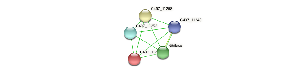 C497_11263 protein (Halalkalicoccus jeotgali) - STRING interaction network
