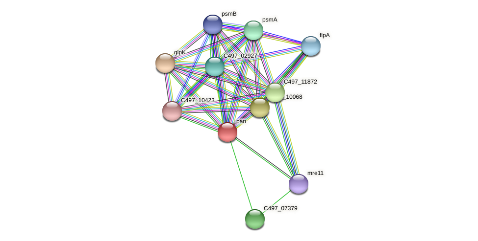 pan protein (Halalkalicoccus jeotgali) - STRING interaction network