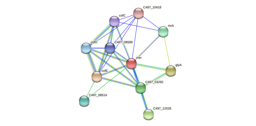 mer protein (Halalkalicoccus jeotgali) - STRING interaction network