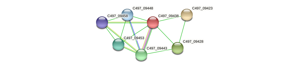 C497_09438 protein (Halalkalicoccus jeotgali) - STRING interaction network