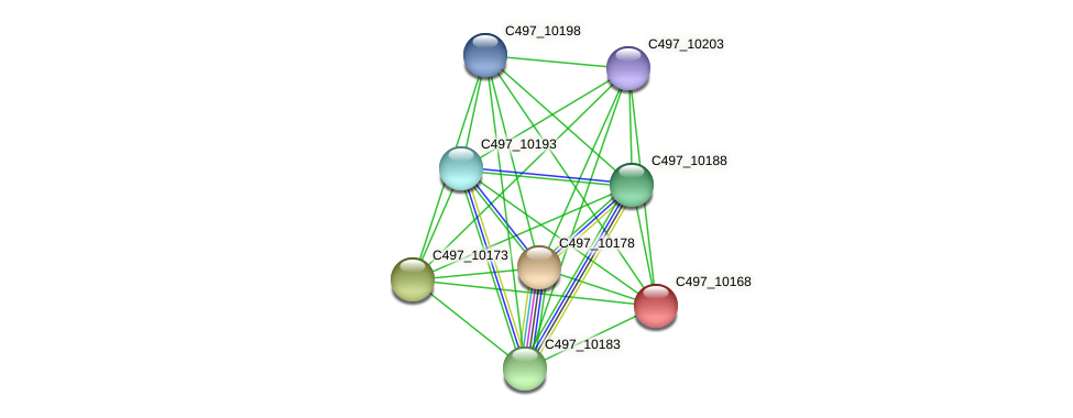 C497_10168 protein (Halalkalicoccus jeotgali) - STRING interaction network