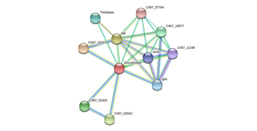 C497_10343 protein (Halalkalicoccus jeotgali) - STRING interaction network