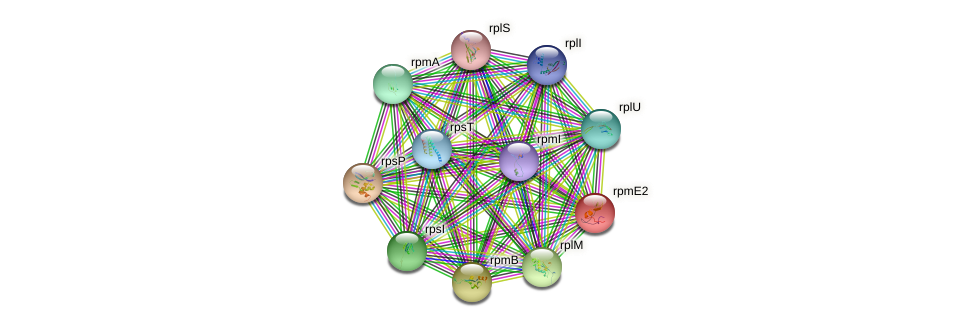 rpmE2 protein (Chlamydia trachomatis) - STRING interaction network